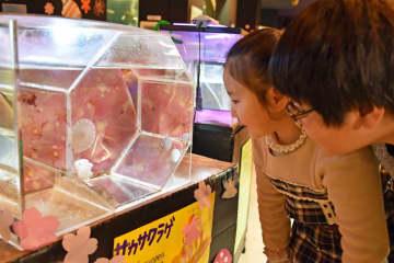 1番人気のクラゲの水槽を眺める子どもたち