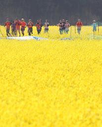 中止されたマラソンのコースの菜の花畑沿いを走る参加予定者ら=姫路市夢前町玉田(撮影・小林良多)