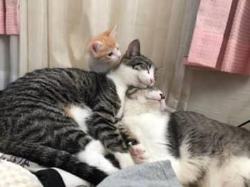 真ん中のネコさんが、動画のゆずちゃん(提供:みこきちさん)