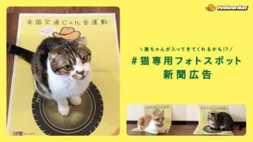 2月22日の猫の日に合わせイエローハットが「全国交通にゃん全運動」を実施!「猫専用フォトスポット」広告も登場!