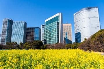 【東京近郊】インスタ映え!関東地方で菜の花畑を楽しめる絶景スポット5選