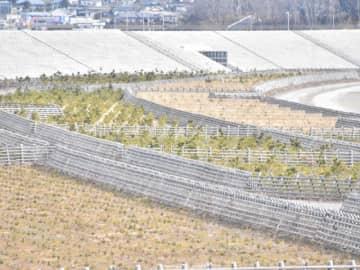 再生に向けて約4万本の植樹が進む高田松原=陸前高田市