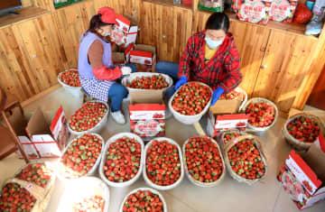 新型肺炎、貧困脱却にも影響 労働者支援に動く中国