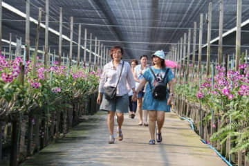 Visitors tour Air Orchid and Lab in Bang Laen district of Nakhon Pathom on Saturday, and were allowed to cut any flower they wanted, free, as a slump in exports leaves a surplus of blooms.  (Photo from Airorchid Supermarket Facebook account)