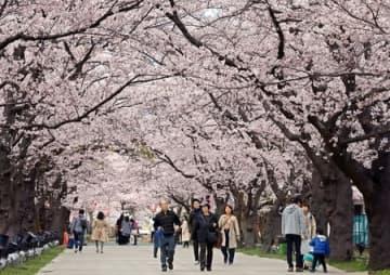 昨年4月の高田公園の観桜会の風景。ことしは各種イベントが中止される=上越市