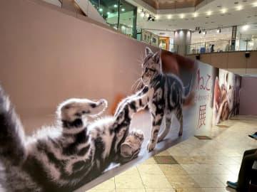 """全国から集まった、猫の""""たまらん""""癒やし♡写真が福岡に!"""