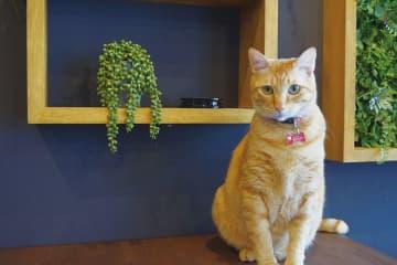プロが選ぶ家具やアートでブルックリンスタイルに 新しいペット可物件 2月22日「猫の日」賃貸企画