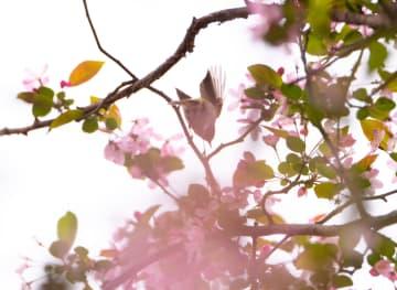 春の公園に鳥のさえずり 貴州省貴陽市