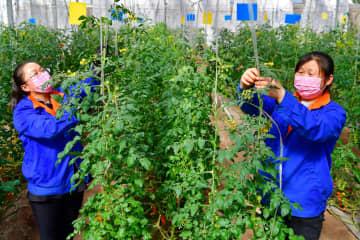 山西省晋中市、貧困支援企業の秩序ある操業・生産再開を推進