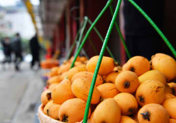 オンライン販売でビワ農家の増収を後押し 福建省莆田市