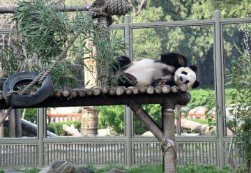 済南動物園、一般開放を再開 山東省