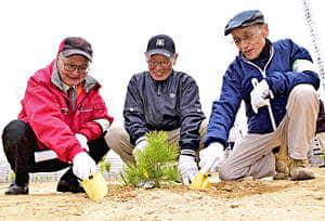 「かしまの一本松」の苗木を植える五賀会長(中央)ら=22日午前、南相馬市鹿島区南右田