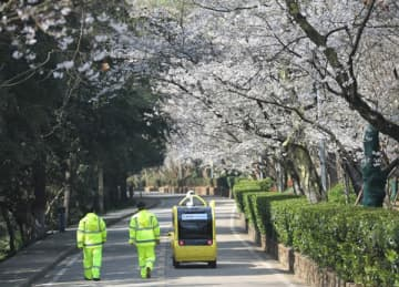 An unmanned vehicle carrying a 5G camera moves along the Cherry Avenue in Wuhan University to offer livestreaming of the blossoms on Tuesday. The livestream lasts from March 16-25.[Photo provided to China Daily]