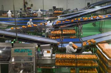 産業パーク内の企業が急ピッチで操業再開 内モンゴル自治区