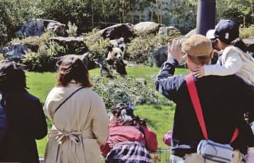 開園後からにぎわうジャイアントパンダの展示施設(23日、和歌山県白浜町のアドベンチャーワールドで)