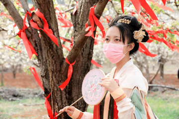 一面の梨の花をオンラインで観賞 雲南省昆明市