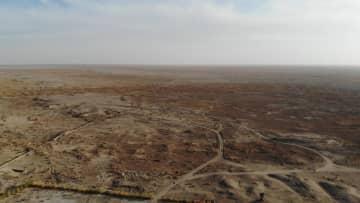 敦煌西湖保護区で野生ラクダ35頭の群れ撮影