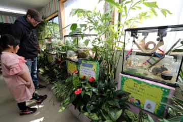 癒やされる動植物を集めた特別展=佐世保市、森きらら