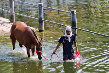 A horse tender takes a horse for cleaning at a farm in an unknown location in Nakhon Ratchasima. (Photo by Prasit Tangprasert)