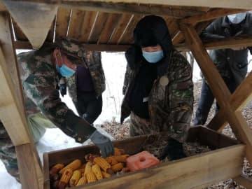 東北虎国家公園、大雪で食料不足の野生動物に餌やり 黒竜江省