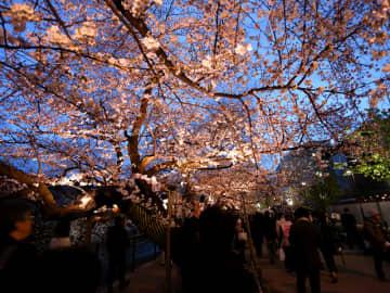 桜の見ごろ。自粛ムードの中、お家でお花見を楽しむ人が急増中 画像