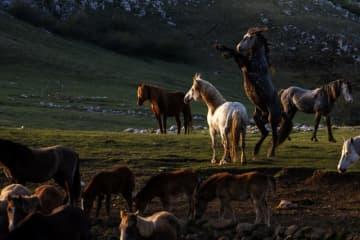 ボスニア・ヘルツェゴビナのシンボル:リブノの野生馬