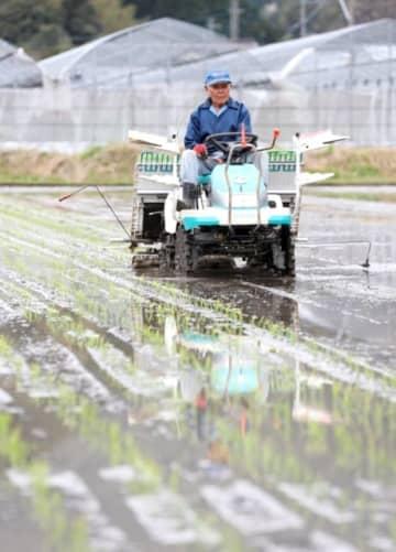 早期米の田植えをする束木原重考さん=28日午前、佐伯市蒲江波当津浦