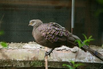 知らずに飼っていた鳥、実は国家一級保護動物 雲南省