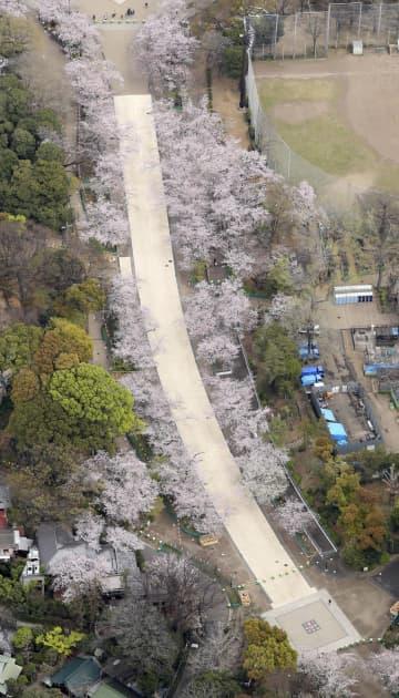 新型コロナウイルス対策で一部通路が通行止めの東京・上野公園の桜の並木道=28日午前11時31分、東京都台東区(共同通信社ヘリから)