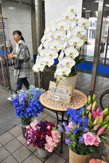 花いっぱいプロジェクトで市役所に提供され、飾られた洋ラン