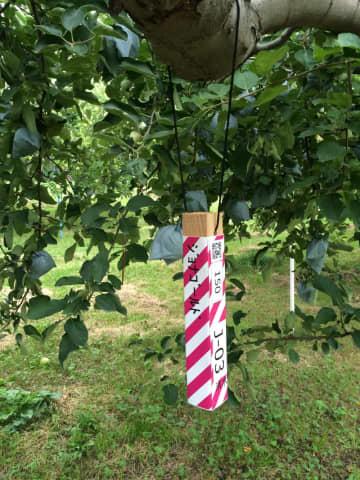 「スマート農業」で若手を振り向かせたい! CG農園で収穫テスト、QRで樹木管理...技術開発進む 画像