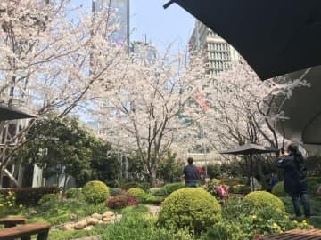 上海市の観光スポット、冷え込みからの回復モードに