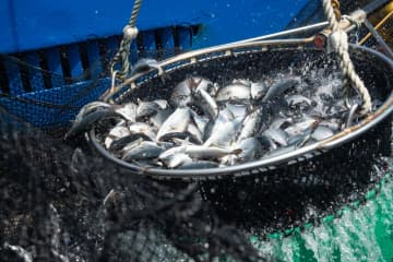 海南省、今年初の養殖用稚魚を日本へ輸出