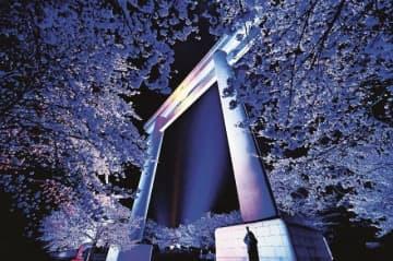 ライトアップされた大鳥居と、青白く浮かび上がった満開の桜(29日、和歌山県田辺市本宮町で)