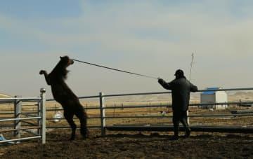 騎馬警察隊、遊牧民と共同で馬の訓練 内モンゴル自治区