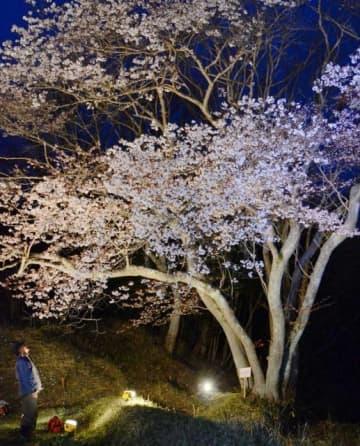 ライトアップされた備前市鶴海の「五本桜」
