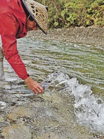 日置川に稚アユを放流する内水面漁協関係者(30日、和歌山県田辺市中辺路町近露で)