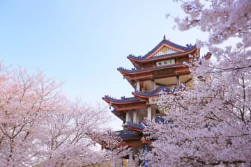 名所の桜が見頃に 江蘇省無錫市