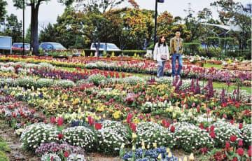 色とりどりに咲く田辺市立美術館前の花壇(和歌山県田辺市たきない町で)