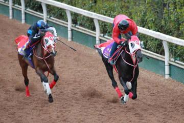大阪杯に出走するステイフーリッシュ(左)と併せ馬を行ったコントレイル