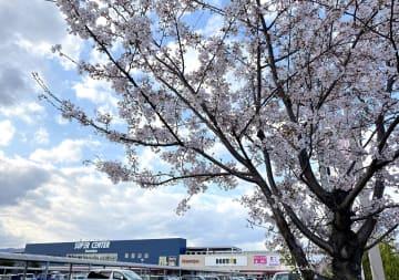 (京都)どうとんぼり神座 八幡店が2020年5月12日(火)オープン予定