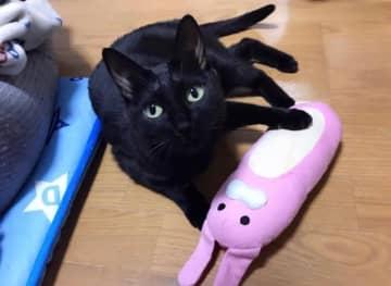 知人から「野良猫を拾ったけどどうしよう」とSOS 放っておけず保護したら、ツンデレさがたまらない猫だった