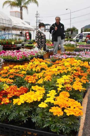 1500種20万本の草花や花木が並ぶ「春のにちなん名物植木市」