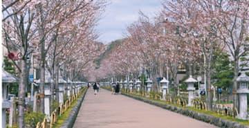 4月4日・5日「感染防止へ観光控えて」」鎌倉の松尾市長異例の呼びかけ