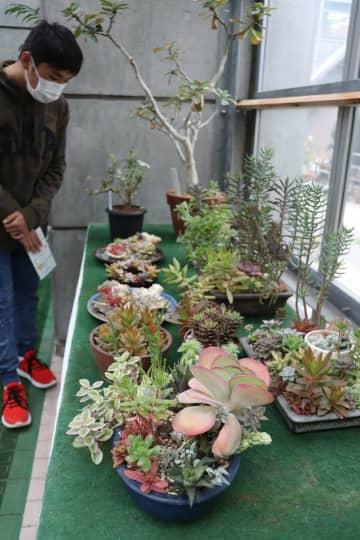 個性豊かな多肉植物が並ぶ展示会場(福知山市猪崎・市都市緑化植物園)