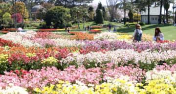 色とりどりのラックス約2000本が満開となっている春のフローラル祭=5日午後、宮崎市・フローランテ宮崎