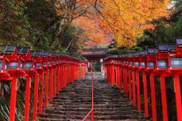 Japan Autumn Leaves Calendar 2020 - Seasonal Forecast And Famous Spots!