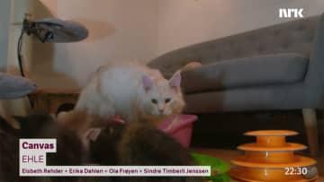 ネコの映像で癒やされる? ノルウェーの公共放送がネットで発信