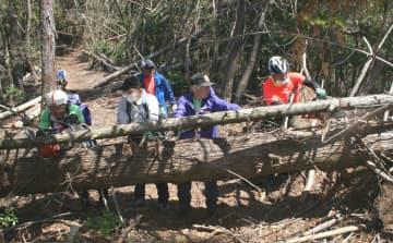 明智越のハイキングコースをふさぐ倒木を取り除く京都愛宕研究会のメンバー(京都府亀岡市保津町)