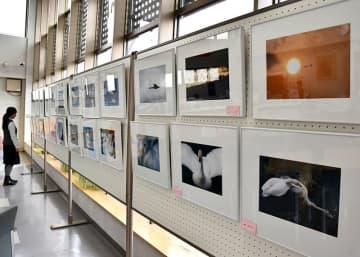 最新の作品も集めた及川さんの写真展「白い恋人たち」